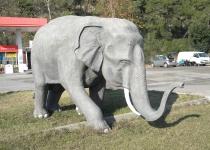 Турецкий слон