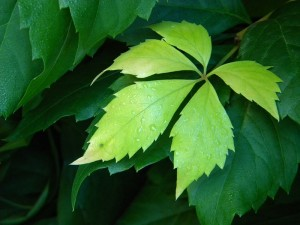 Листочек зелёный
